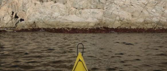la franja d´algues, normalment submergida, es veu emergida en temps de minves