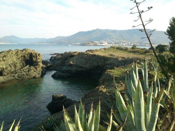L´atzavara i la figuera de moro són plantes exòtiques molt comunes a la franja litoral