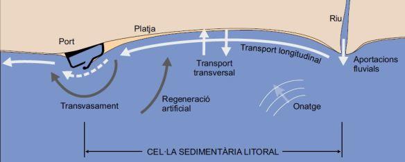cellula sedimentaria