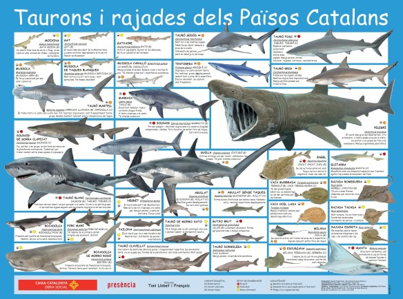 taurons-poster