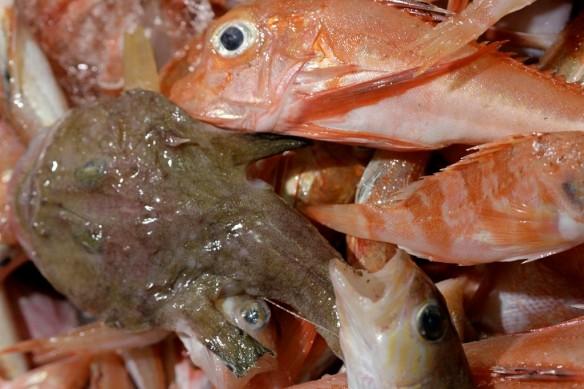 peix roca