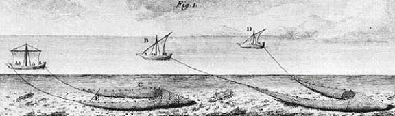 ganguil-bou Duhamel du Monceau