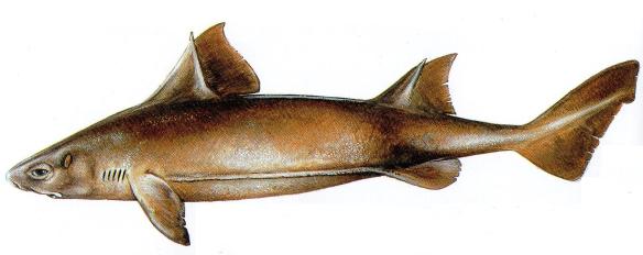peix porc