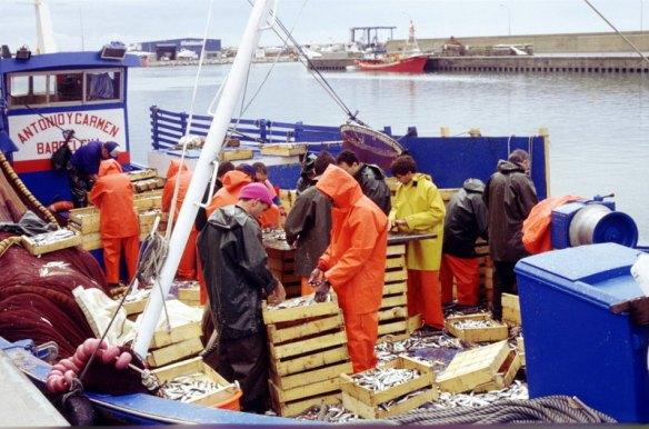 pesca15-15