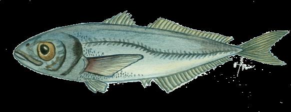 sorell-sos-peix