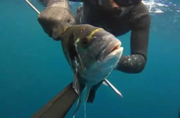 pesca-submarina1