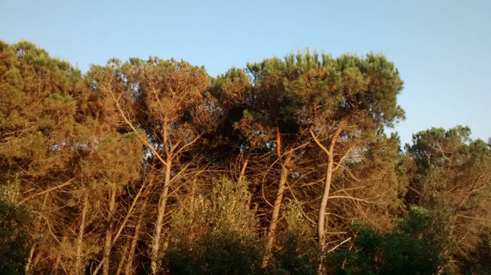 aspecte-parc-serralada-litoral-manel_1378672278_23972282_1000x561